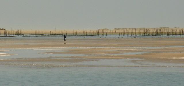 Arcachon Bay Boat Pilat Sand Dune Arguin Sand Bank Boat Trip