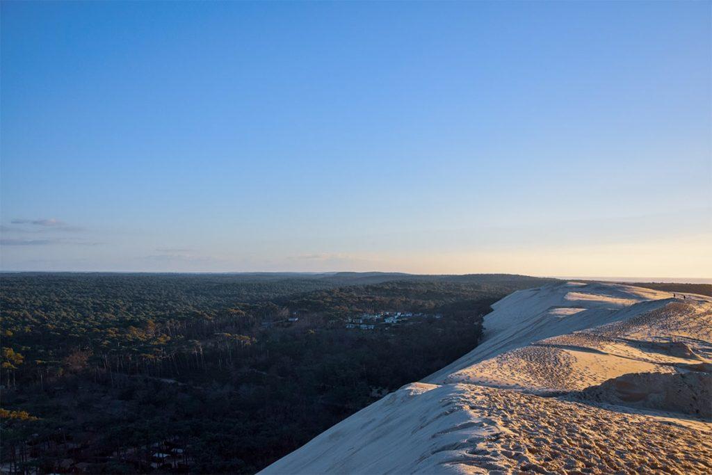 Forêt Est de la dune